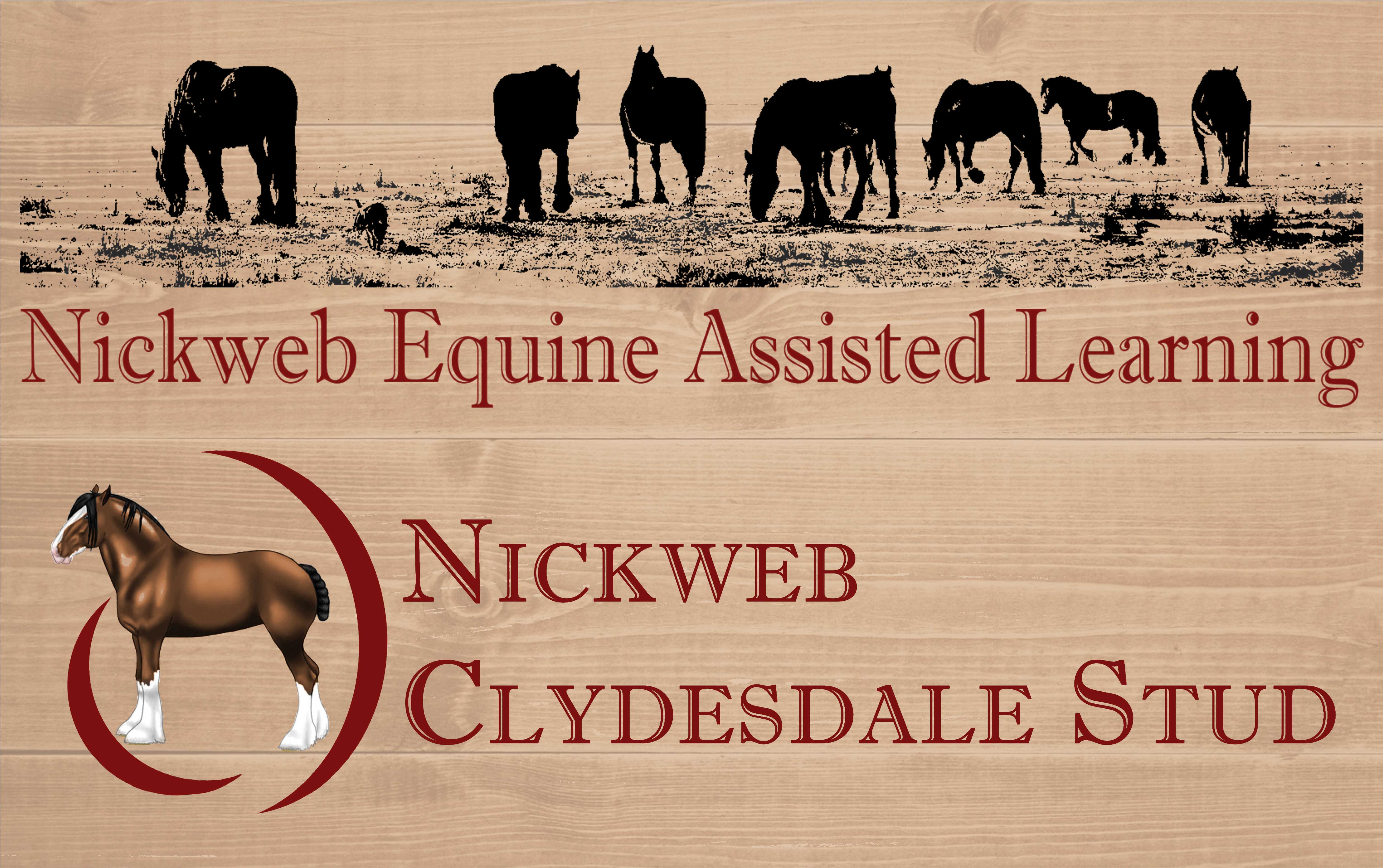 Nickweb Equine Assisted Learning